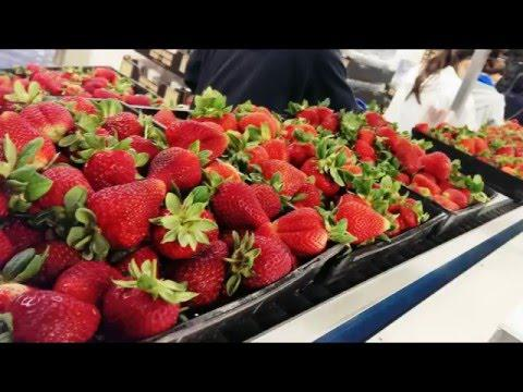 A&D Checkweighing Simplified - Checkweighing Open Berry Punnets