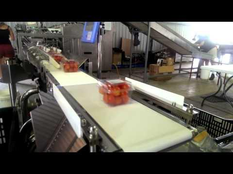 Checkweighing Simplified For Punnet Tomatoes